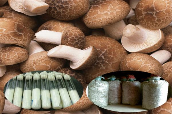 菌种培训  菌种销售