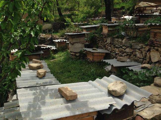 很大的蜜蜂 土蜂养殖