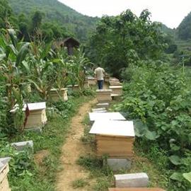 贵州蜜蜂整箱批发
