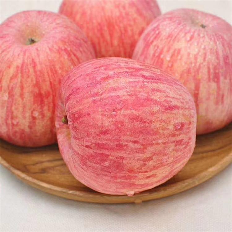 有机苹果种植批发,苹果供应厂家