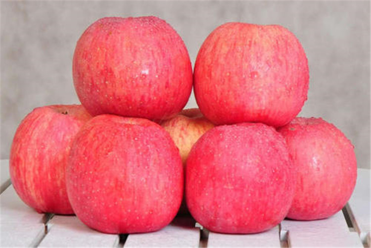 陕西有机苹果厂家,种植批发