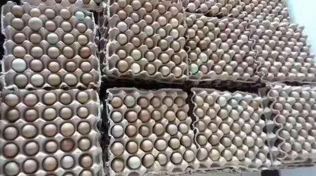 铜仁七彩山鸡蛋
