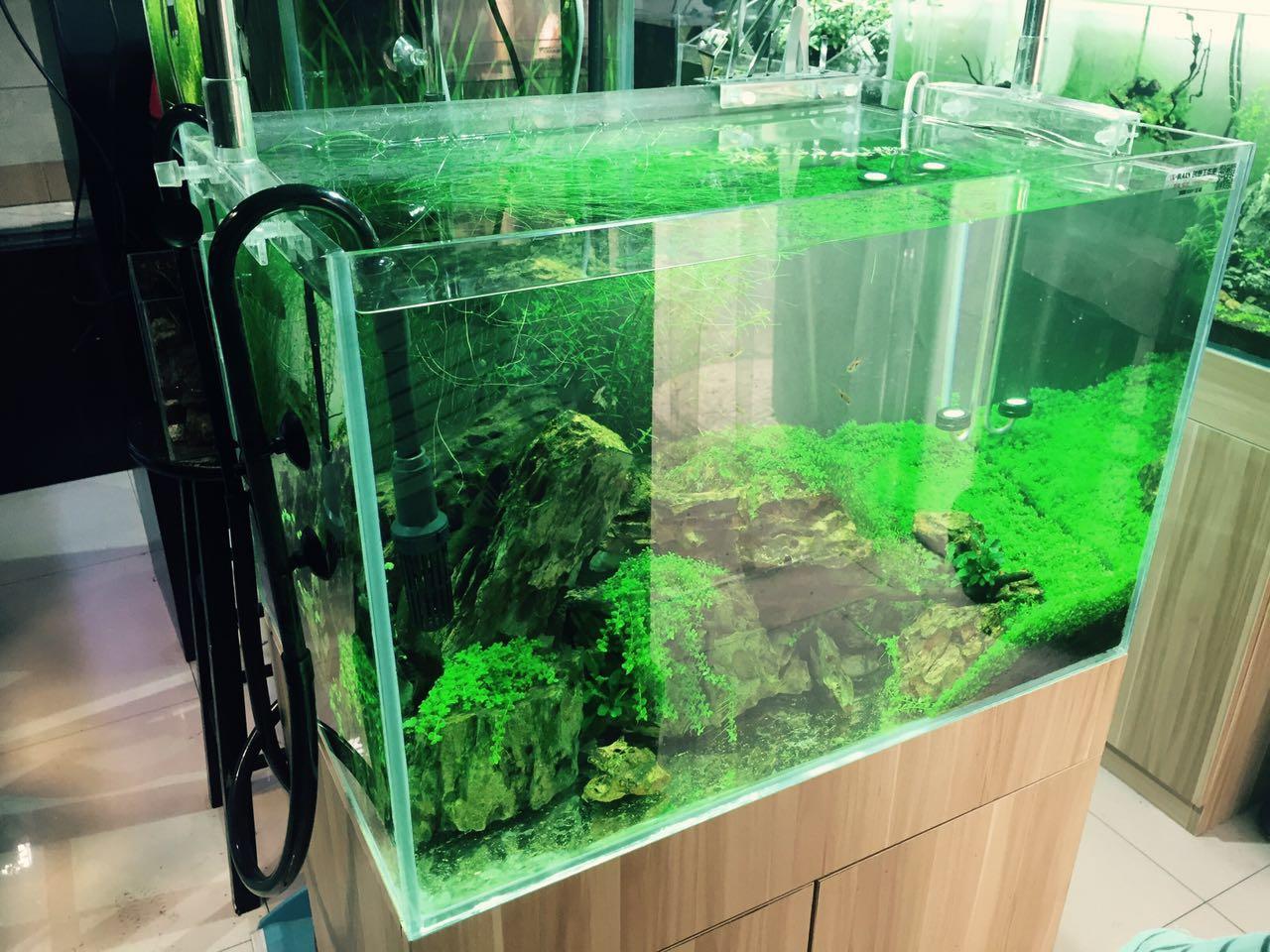 陕西西安草缸造景水陆缸雨淋缸生态缸可定制可成品热带鱼草缸