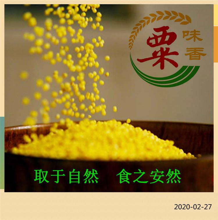 澄城原产地黄小米 精品无添加黄小米