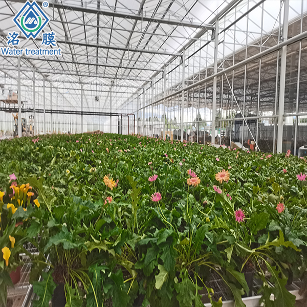 鲜花灌溉反渗透纯水设备 反渗透水处理 销售反渗透设备厂家