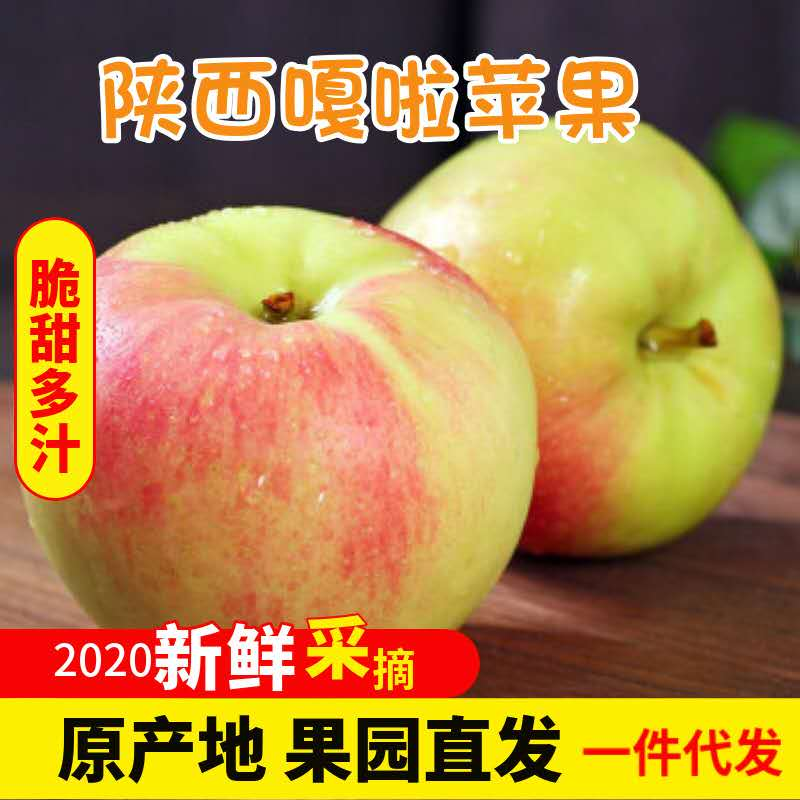 果园直销嘎啦苹果5斤现摘现发早熟苹果当季新鲜水果红苹果