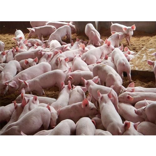 养殖电热地暖暖先森石墨烯供暖产品宝鸡总代理商