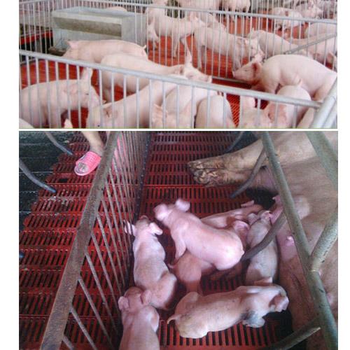 猪舍鸡舍牛舍养殖电热地暖暖先森石墨烯供暖产品宝鸡总代理商