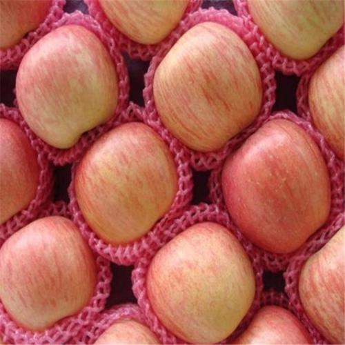 红富士苹果供应商 现货苹果供应
