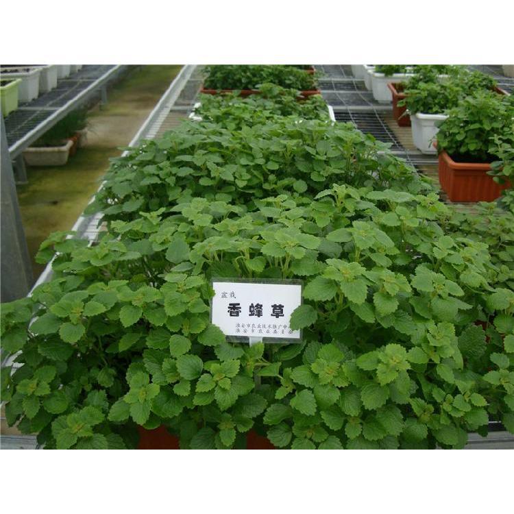 延安辣椒育苗基质商家 汉中西瓜育苗基质 草莓育苗基质