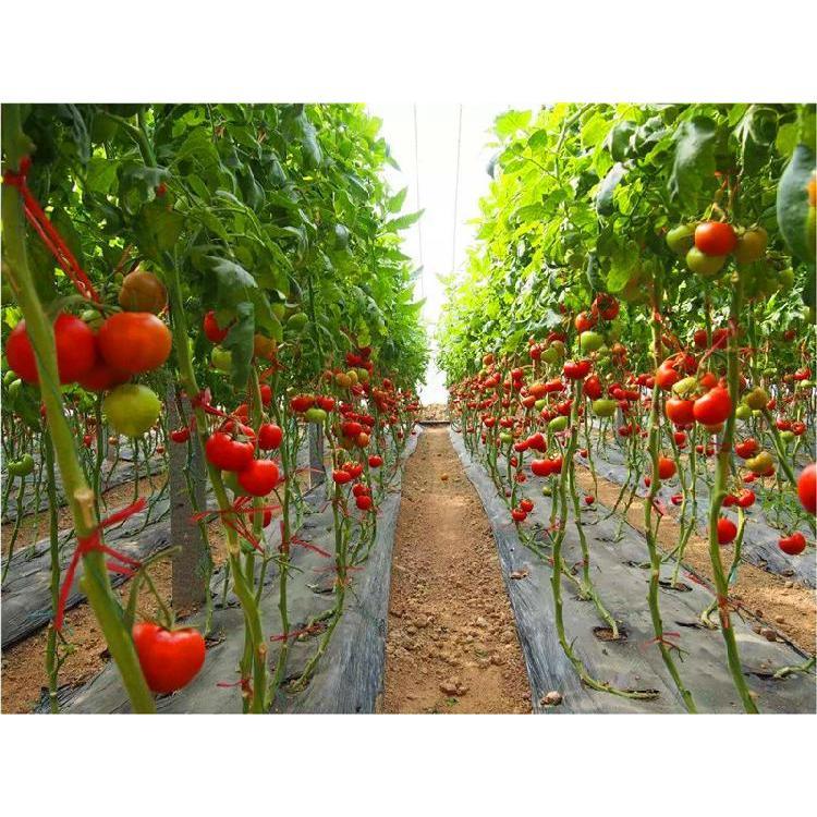 汉中草莓育苗基质批发价格 铜川育苗基质 育苗基质