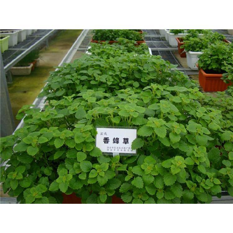 宁夏西瓜育苗基质厂家 陕西蔬菜育苗基质 蔬菜育苗基质