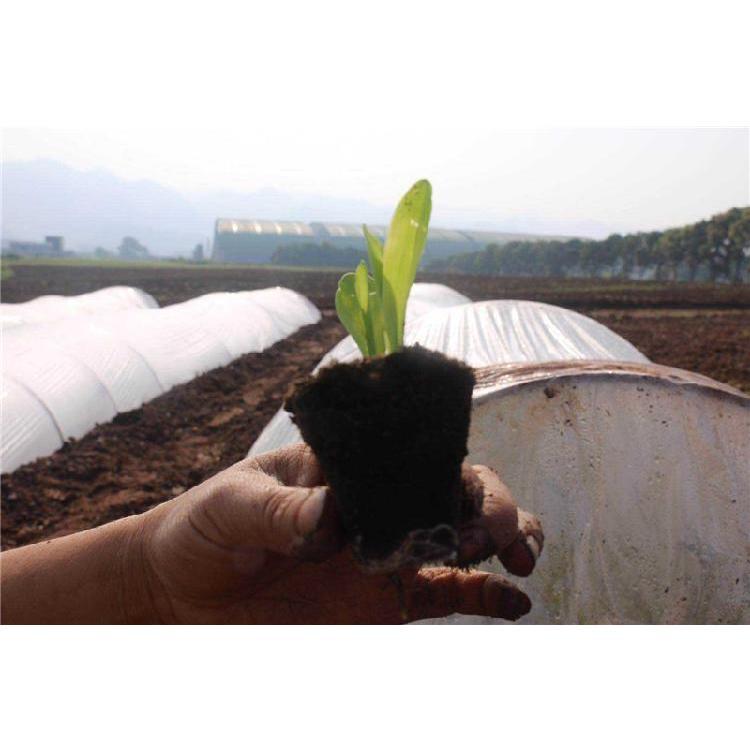 宁夏草莓育苗基质厂家价格 陕西育苗基质 辣椒育苗基质