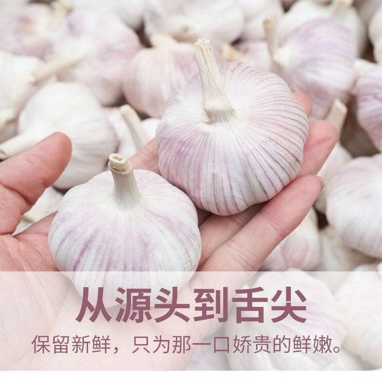 产地直发包邮贵州大蒜约2.5kg干蒜头独头嫩蒜 新鲜紫白皮干蒜头