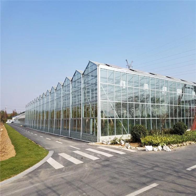 陕西鼎泰鑫   玻璃温室大棚厂家 玻璃温室建设