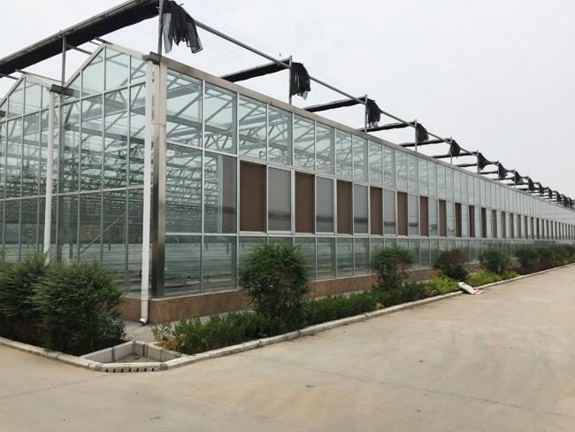 陕西鼎泰鑫单体温室大棚建设 单体温室大棚骨架厂家 单体温室大棚