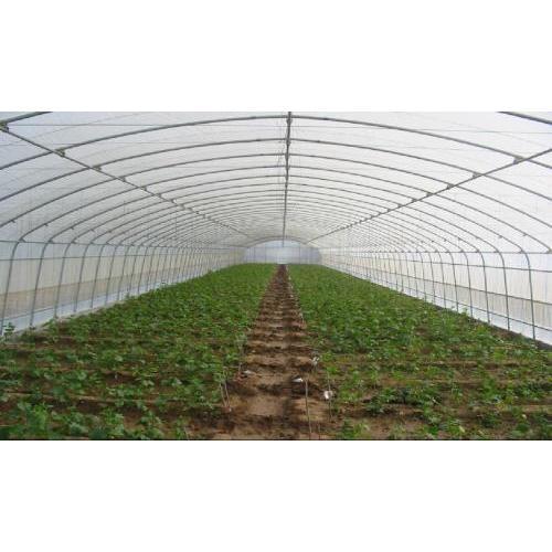 陕西厂家供应优质食用菌棚 定制食用菌棚