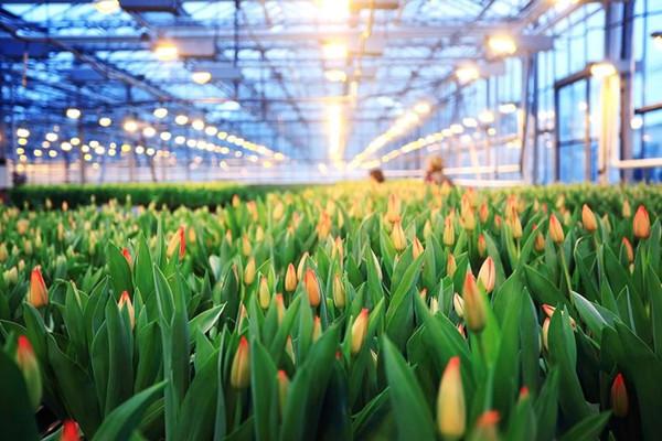 西安花卉观光温室厂家定制加工安装