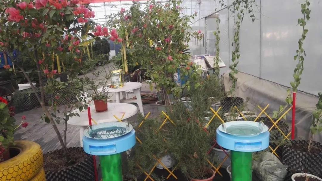 陕西无土栽培种植、栽培技术一体化 温室公司