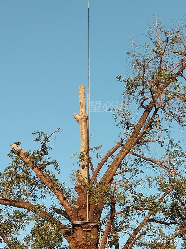 高性能复合材料古树专用避雷针批发