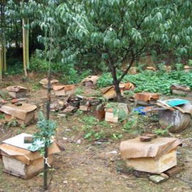 大方县百耕中蜂小蜜蜂_毕节蜜蜂的价格_贵州蜜蜂的饲养方法_毕节蜜蜂养巢